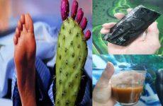 Sử dụng cao gắm ngâm rượu trị gout hiệu quả