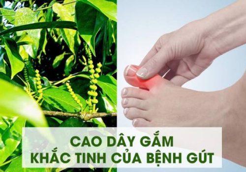 Cao gắm trị Gout - đau nhức xương khớp